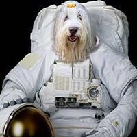 Dog Winston